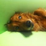 2012年5月元気になってくつろいでいるユニ